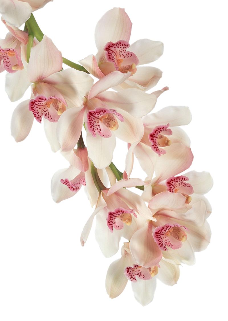 flowers 348