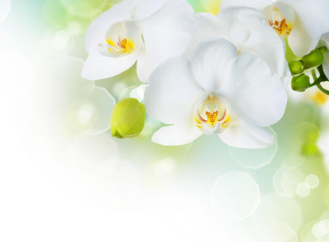 flowers 349