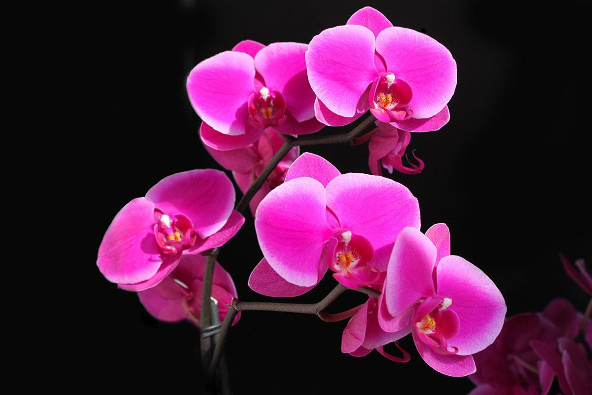 flowers 355
