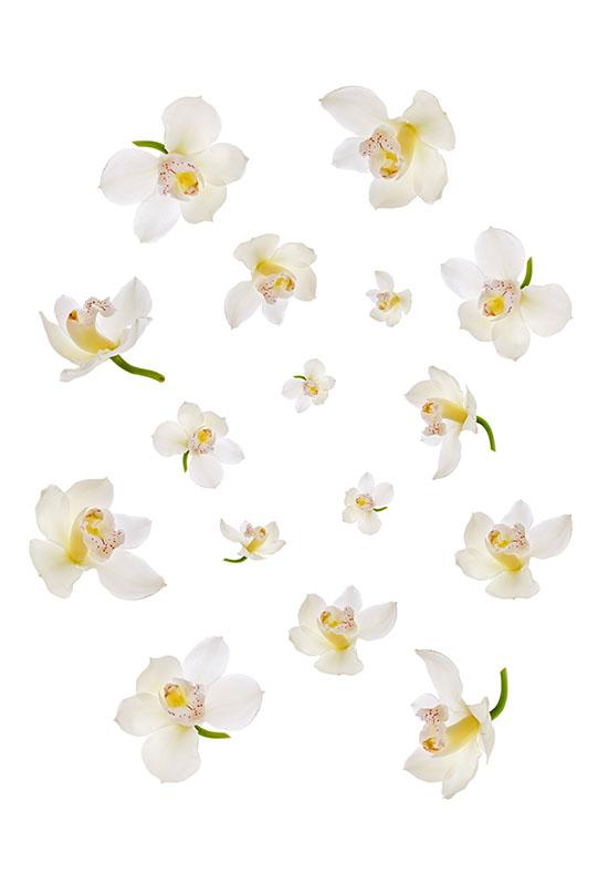 flowers 357