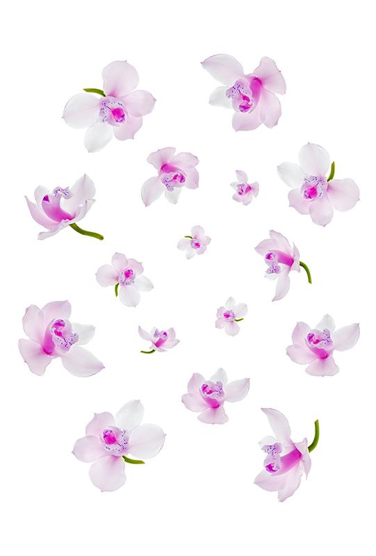 flowers 358
