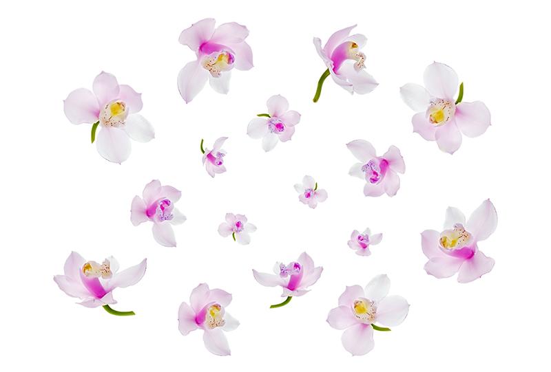 flowers 359