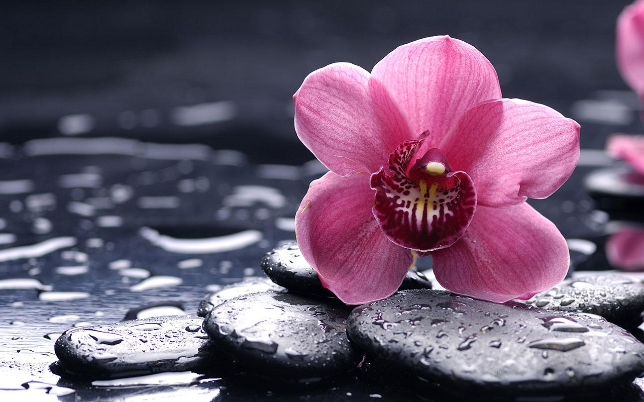 flowers 360