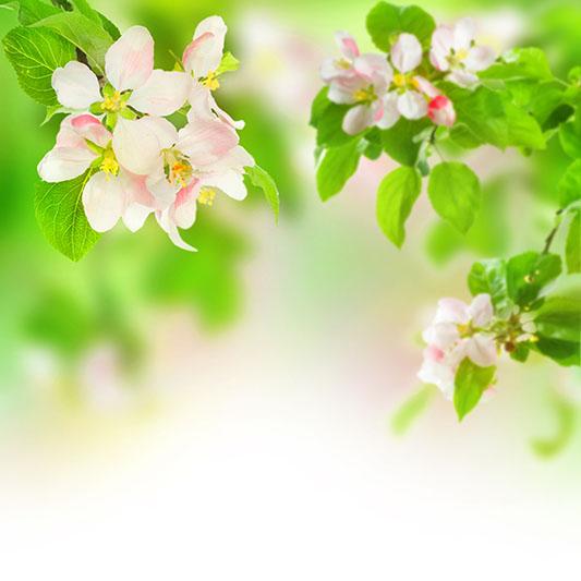 flowers 364