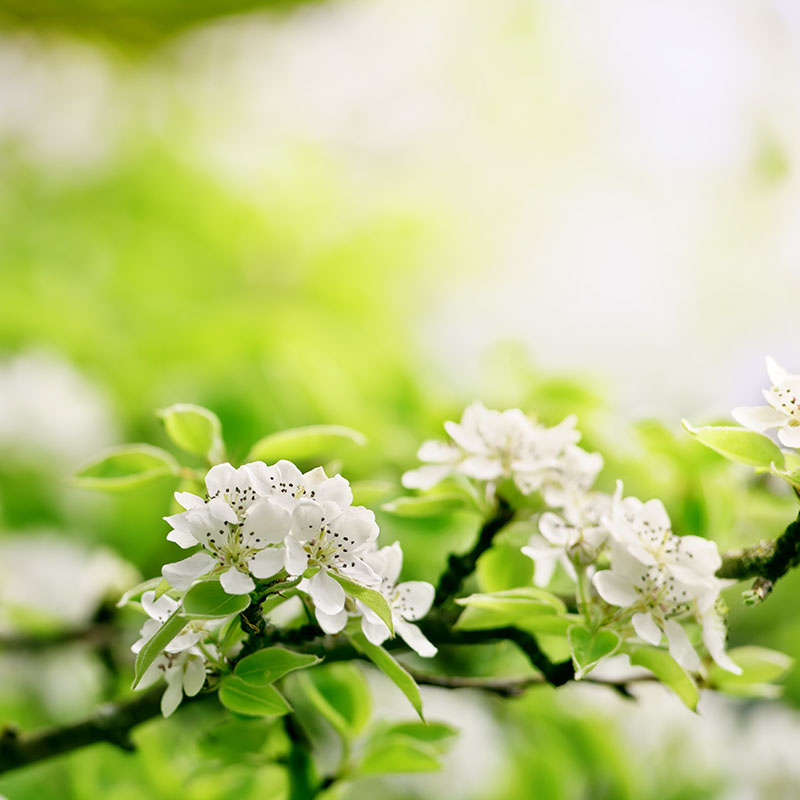 flowers 366