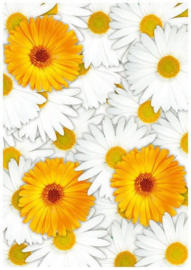 flowers 369