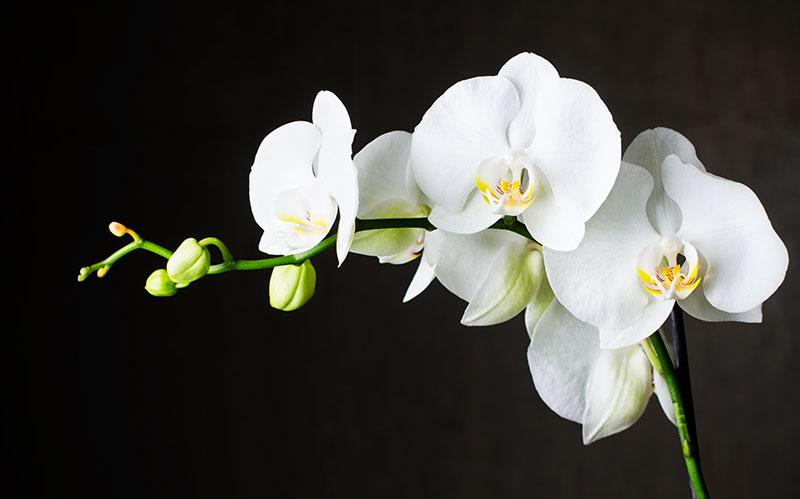 flowers 372