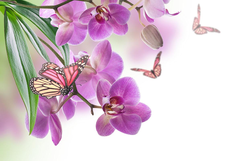 flowers 375