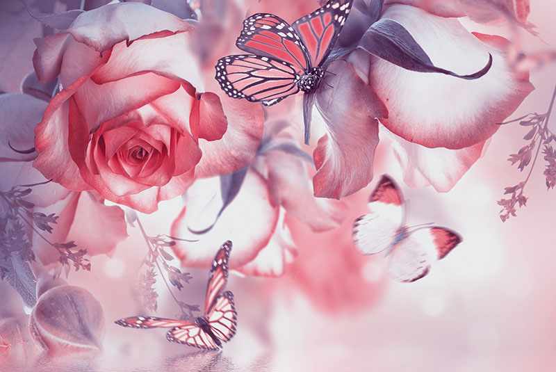 flowers 377