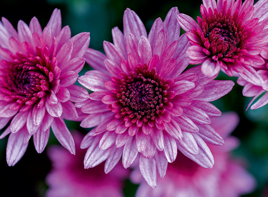 flowers 378