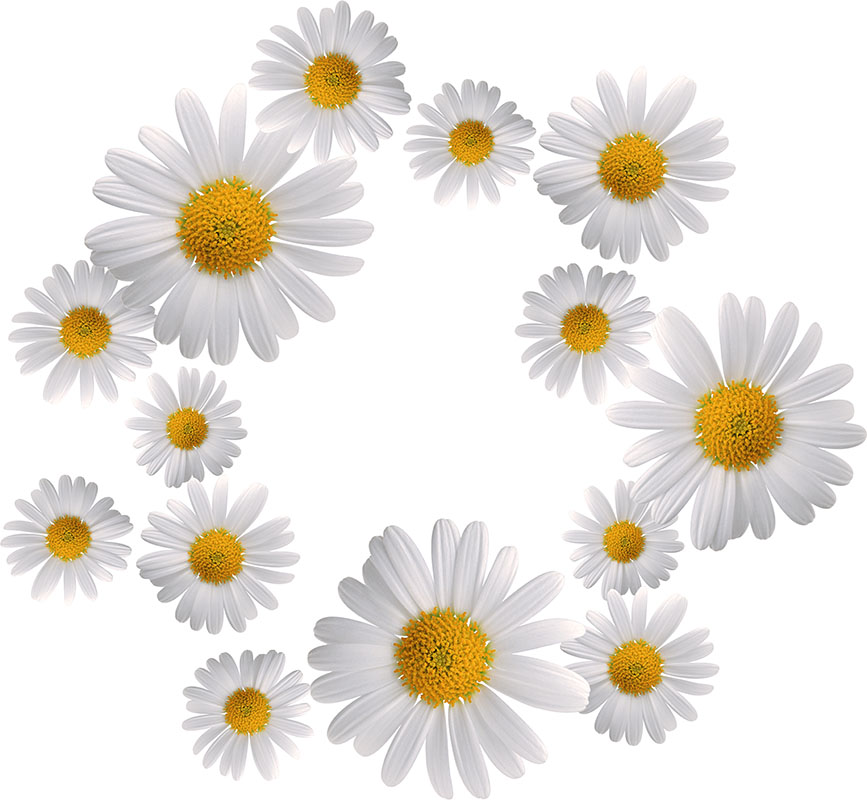 flowers 379