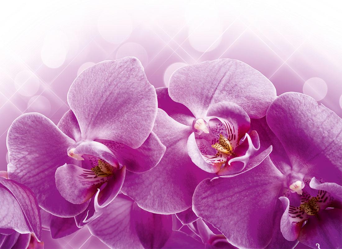 flowers 381