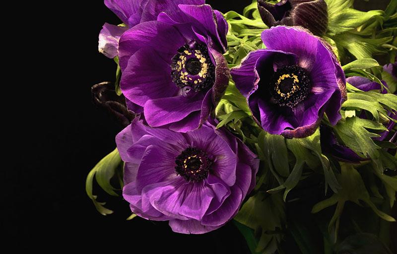 flowers 387
