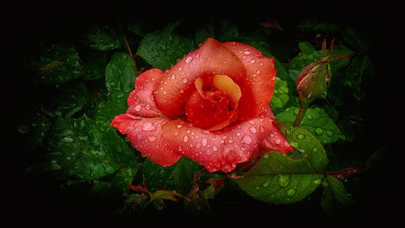 flowers 392