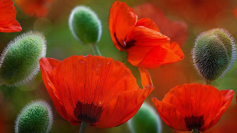 flowers 394