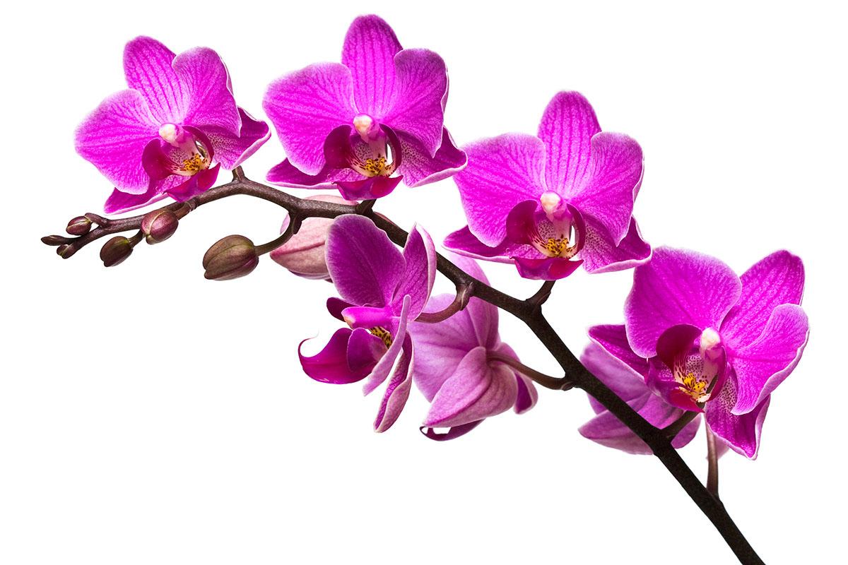 flowers 395