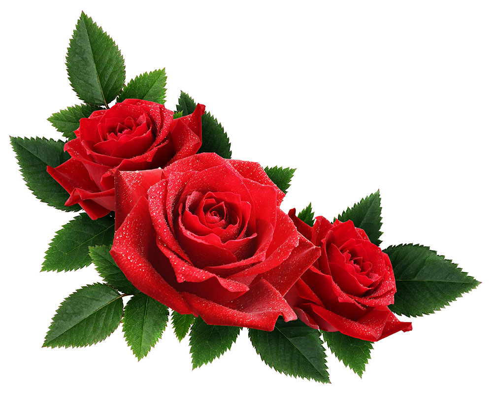 flowers 404