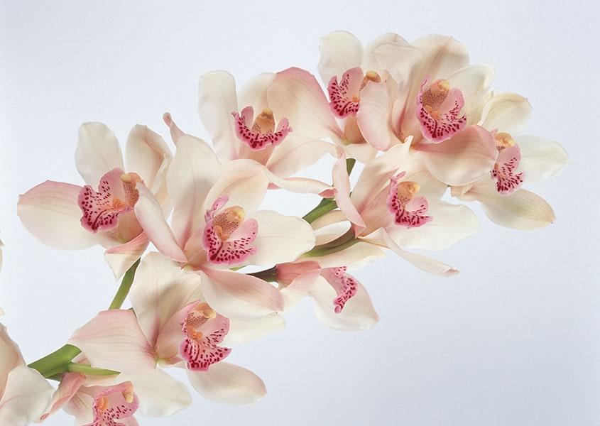 flowers 407