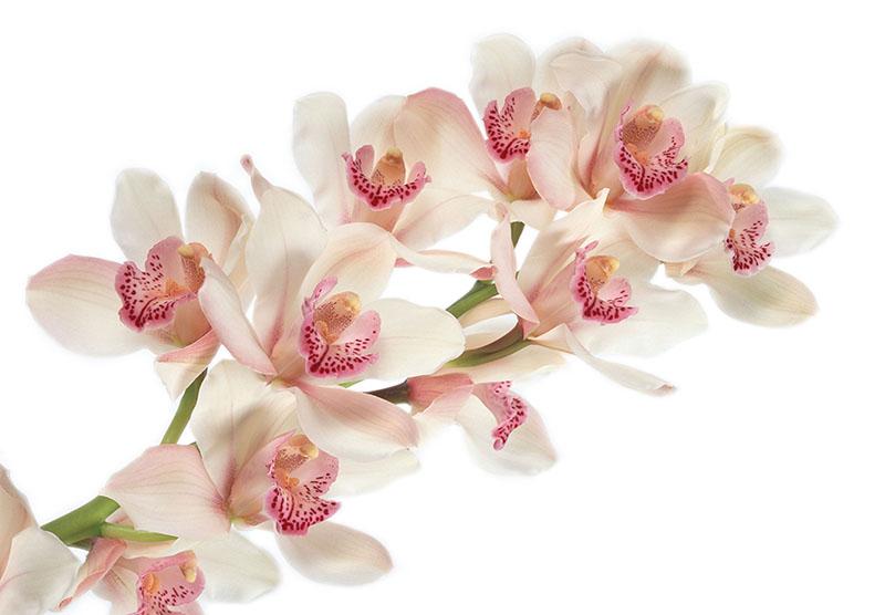 flowers 408