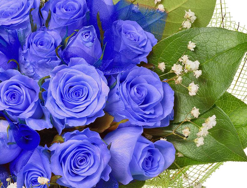 flowers 412