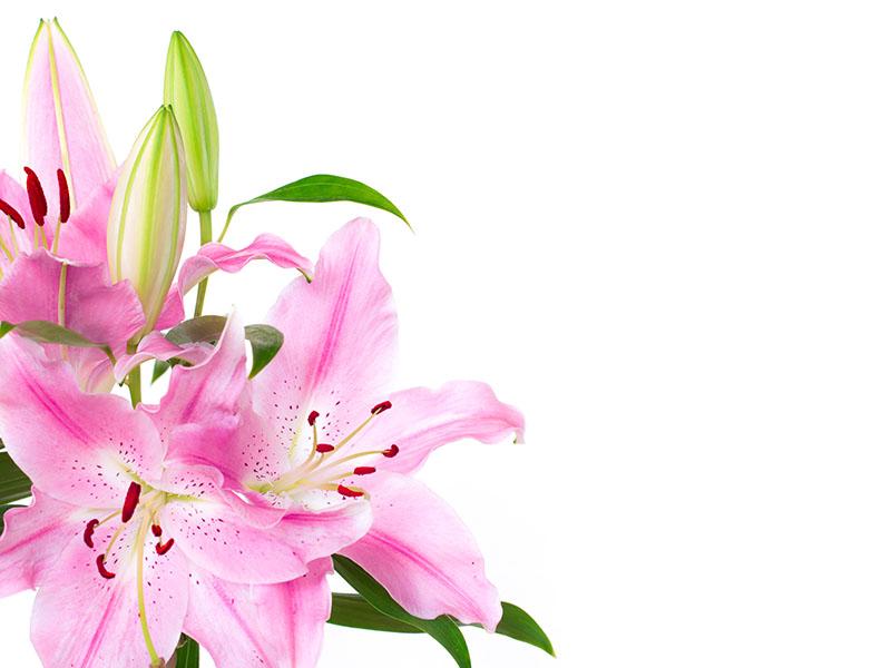 flowers 413