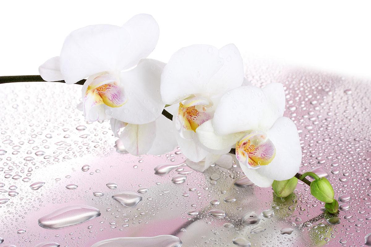 flowers 421