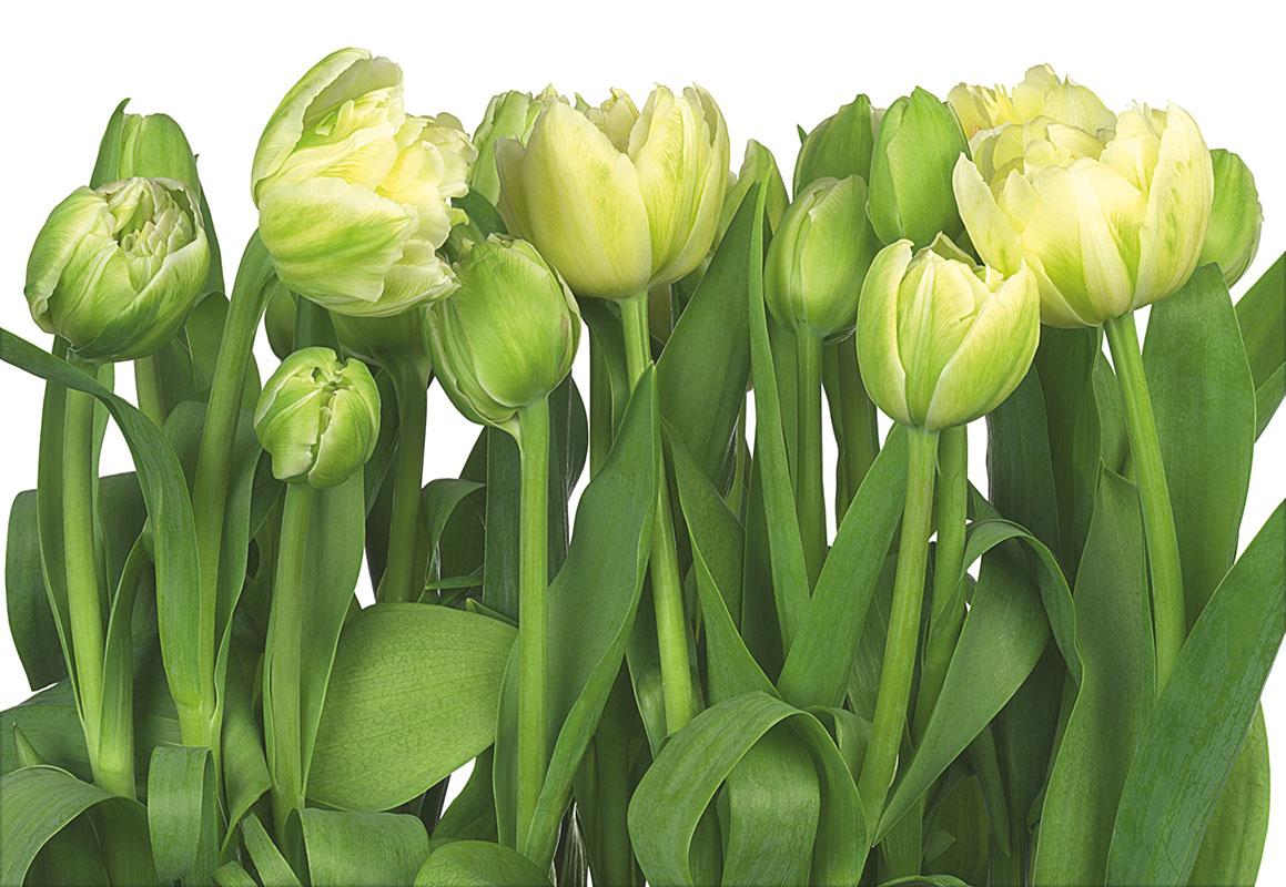 flowers 423
