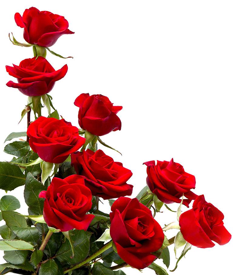flowers 426