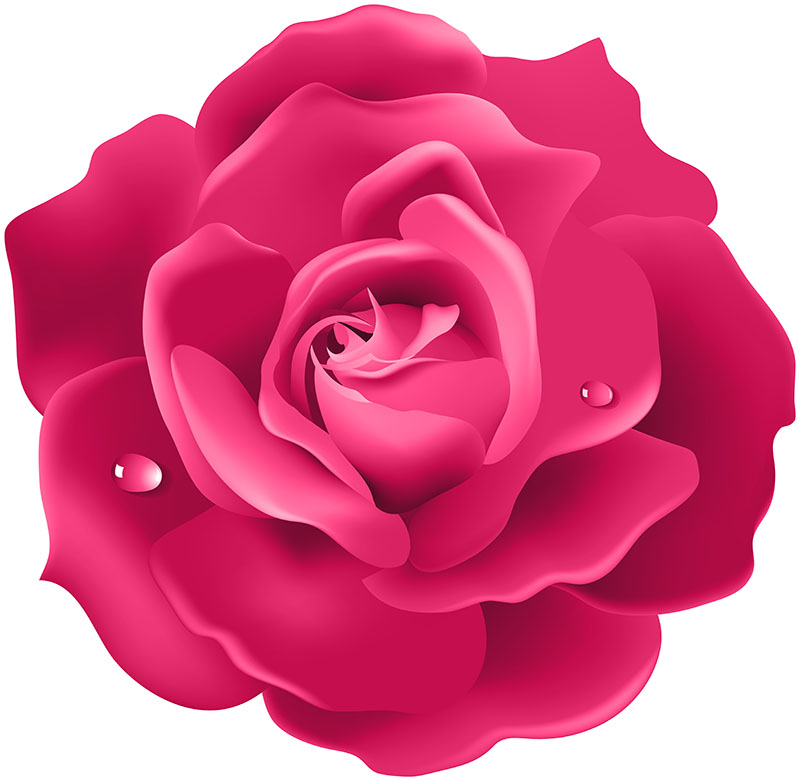 flowers 438