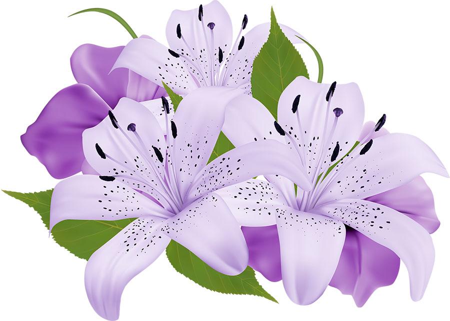 flowers 440