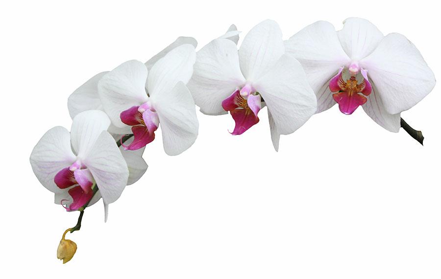 flowers 441