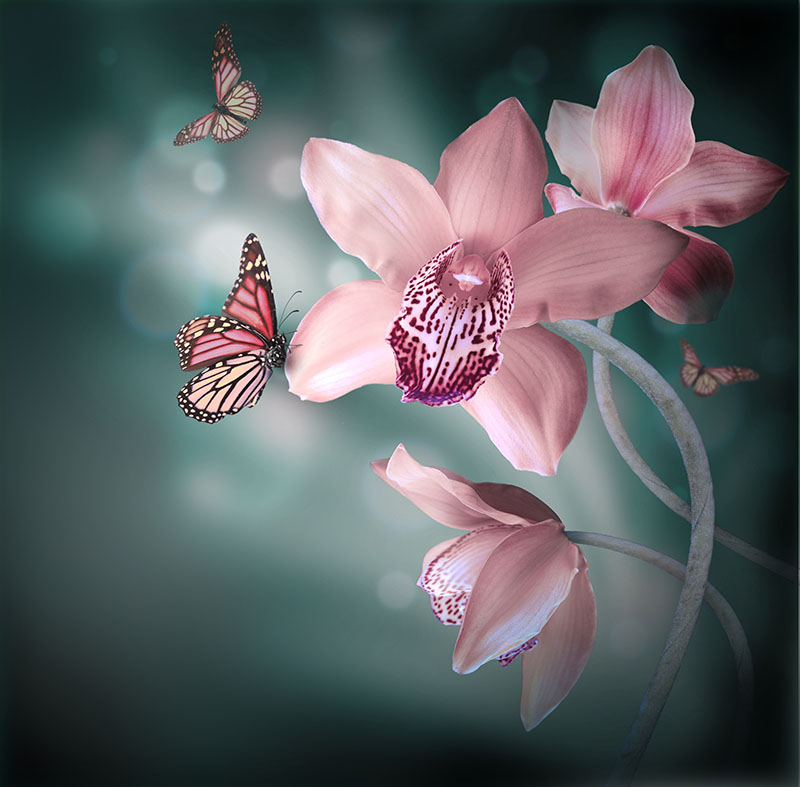 flowers 446