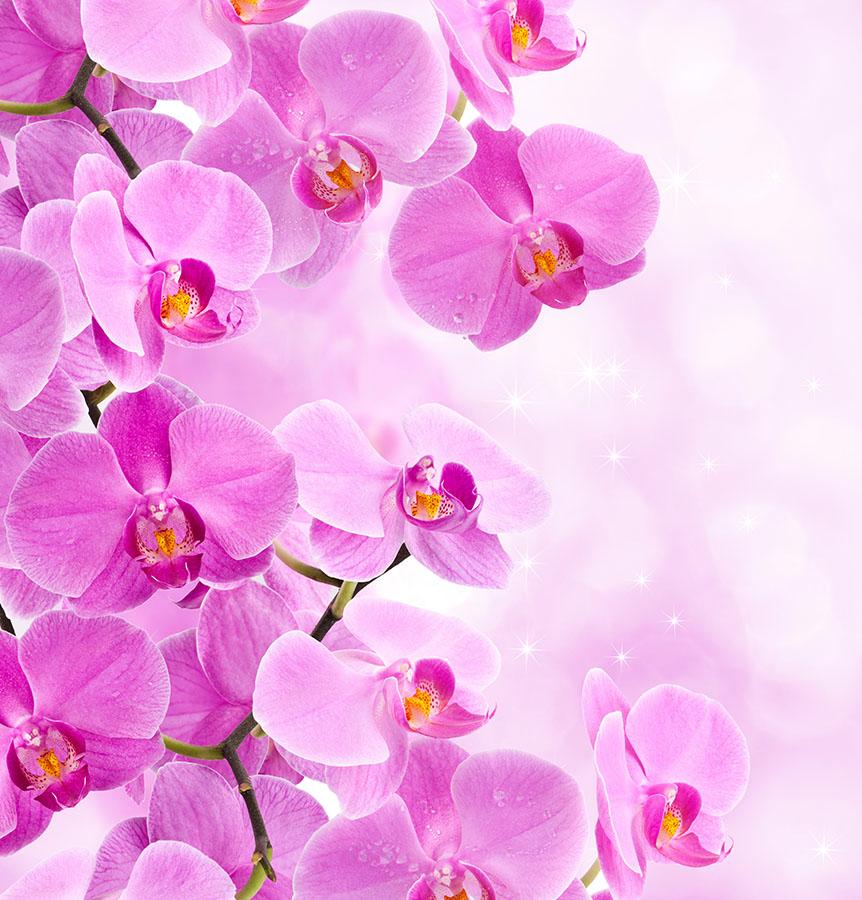 flowers 449