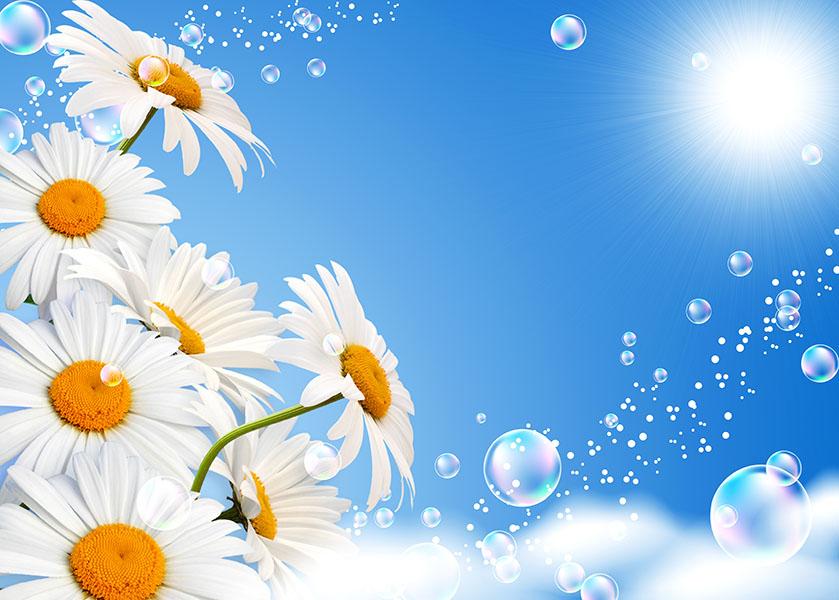 flowers 465