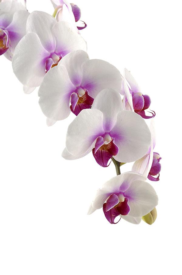 flowers 464