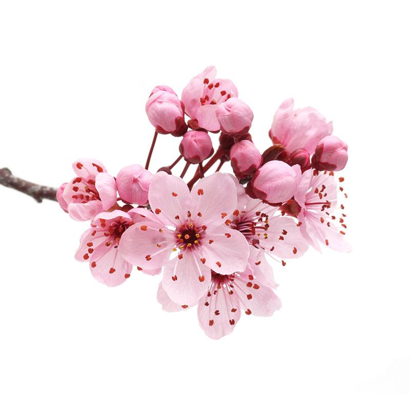 flowers 466