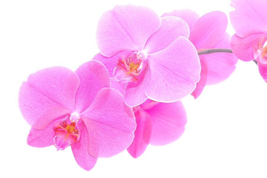 flowers 489