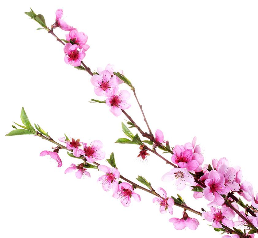 flowers 496