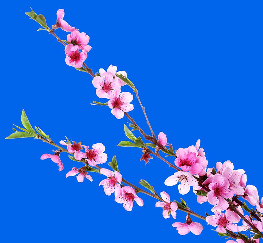 flowers 497