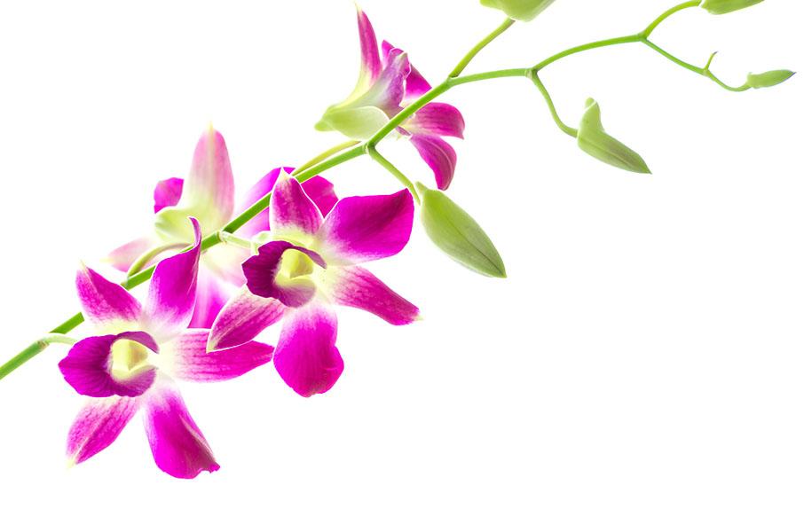 flowers 499