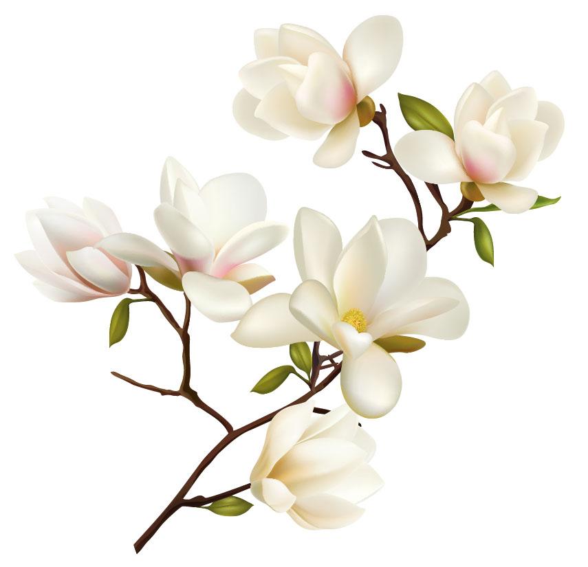 flowers 504