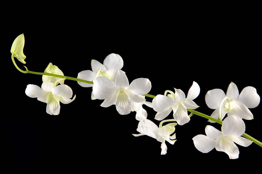 flowers 516