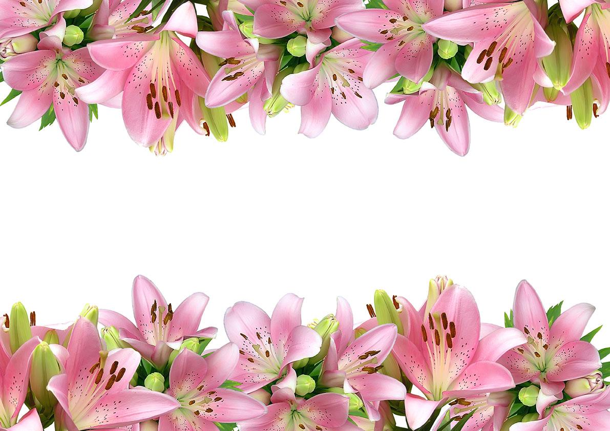 flowers 518