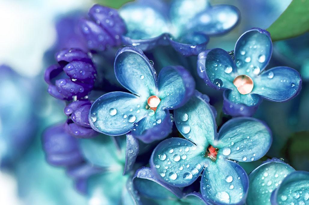 flowers 521