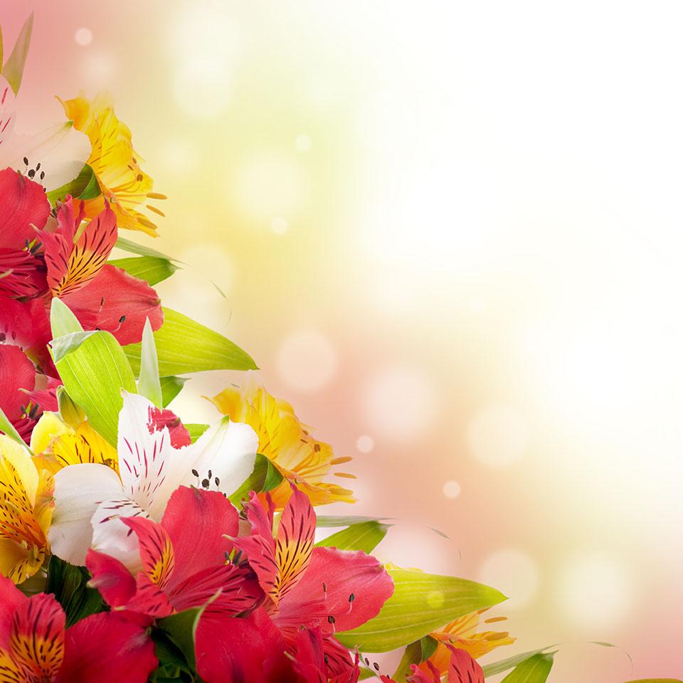 flowers 520