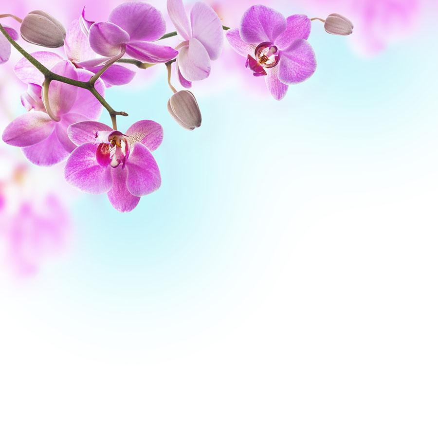 flowers 522