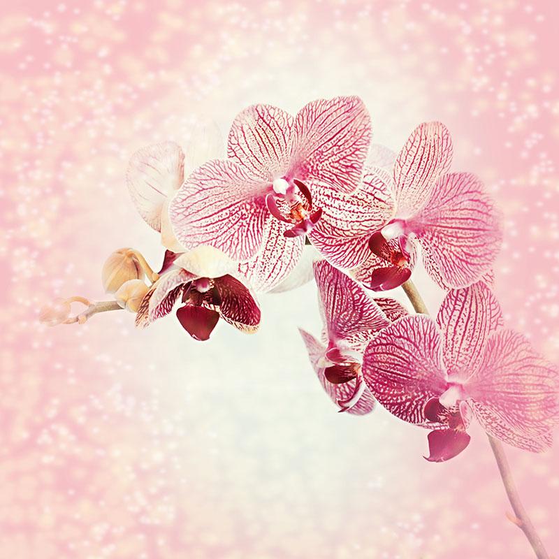 flowers 524