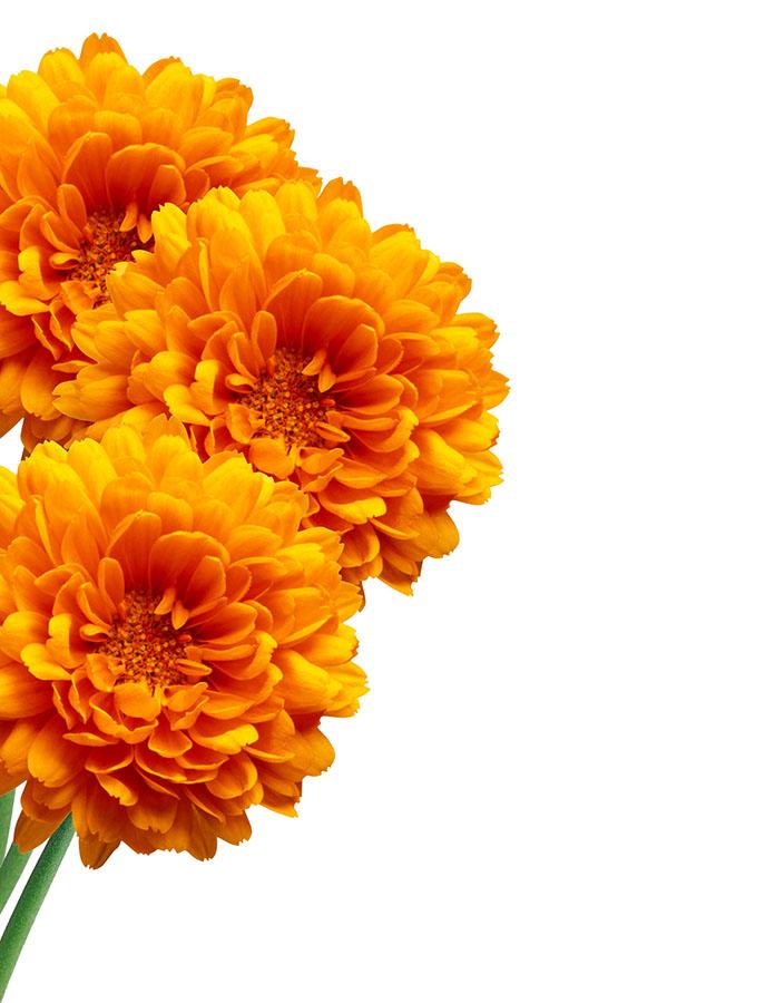flowers 526
