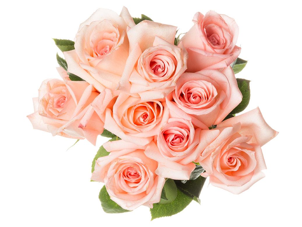 flowers 527