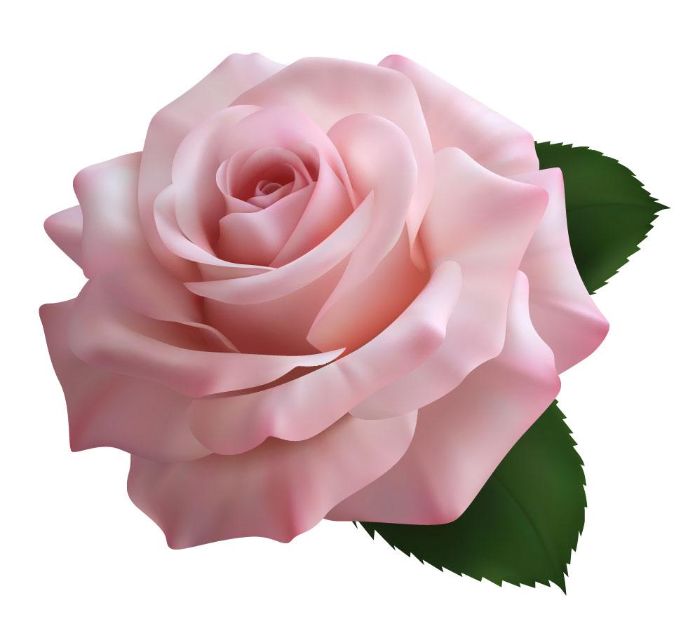 flowers 532